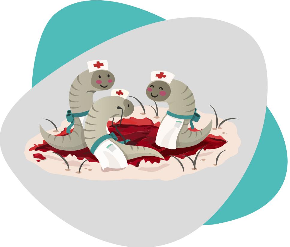 suesse blutegel bei der Therapie