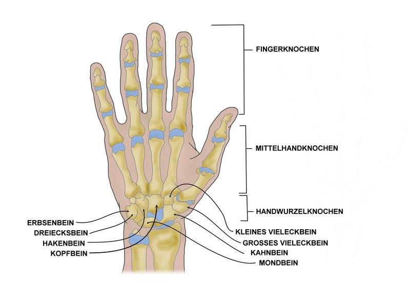 Operationen am Handgelenk   Eingriffe   Nachbehandlung   Heilung